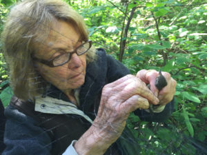 Donna received one of Tahoma Audubon's banding scholarships in 2014.