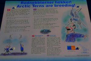 Arctic Tern warnings